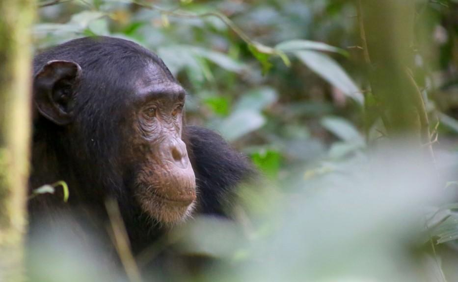 Gorilla tracking holiday safari ideas