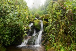 Nature walks and hiking safaris in Uganda