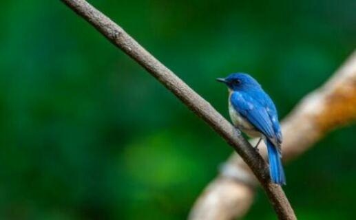 Bird species in Uganda