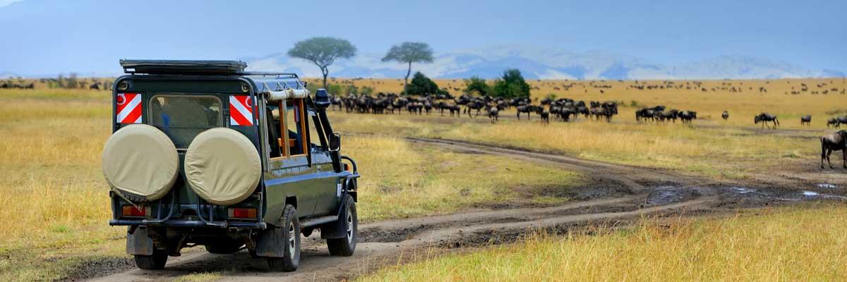 Rwanda, Kenya and Tanzania safaris