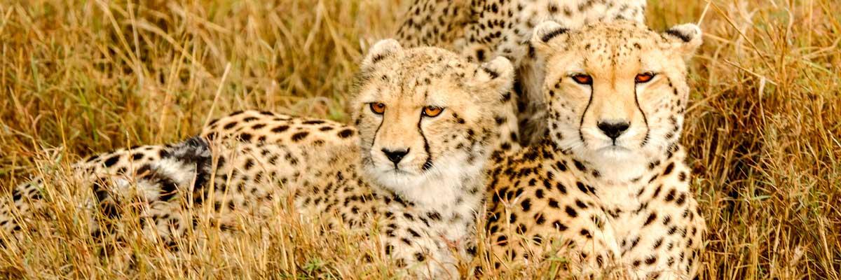 Safaris to Kenya, Rwanda and Tanzania