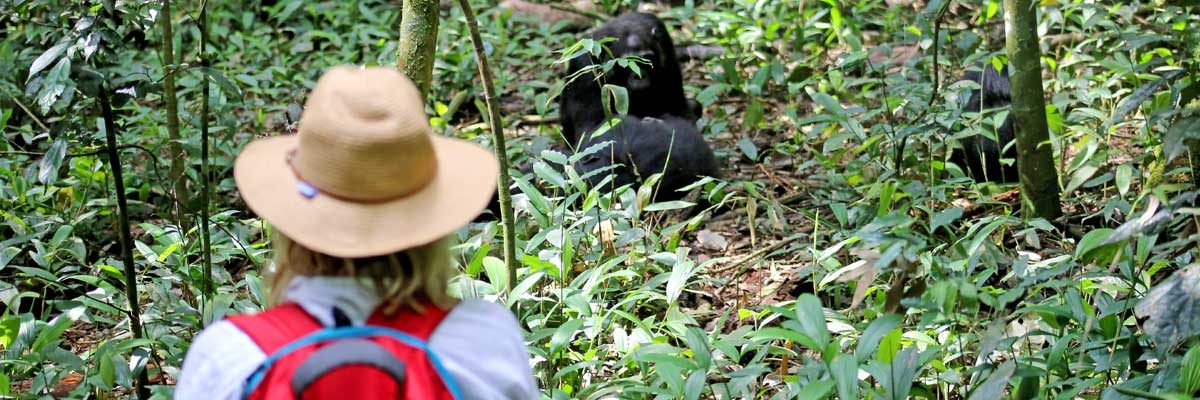 Gorilla and Chimpazee tracking