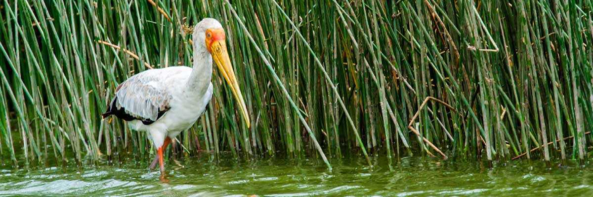 Birds at Lake Mburo national park