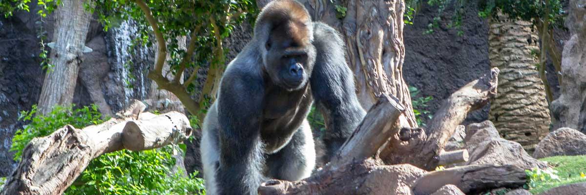 Mgahinga gorilla park
