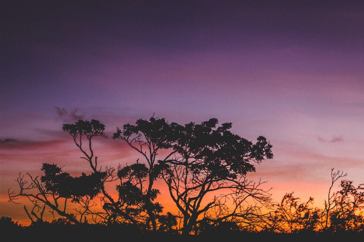 Sunset view of nature