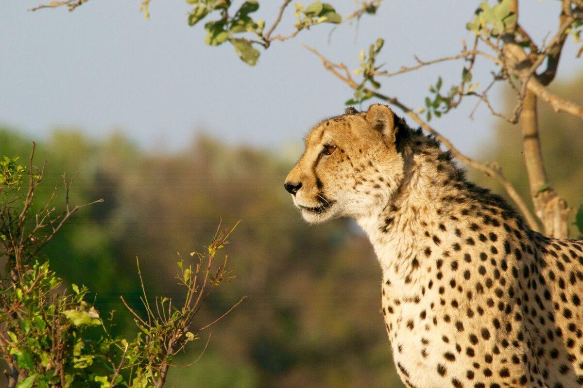 Wildlife safaris to Africa