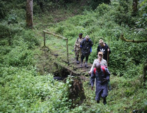 Rwenzori Park Forest Hike – 3 Days